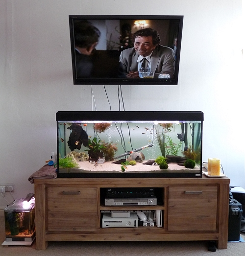 Our 240 litre fish tank! With Columbo on the telly above and 20 litre fish tank at the side. UK, 2010